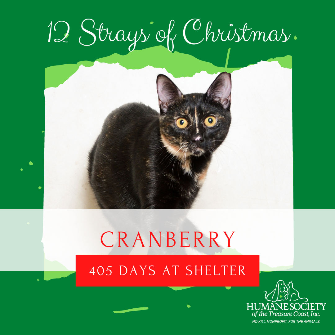 12_Strays_of_Christmas_11_Cranberry.png