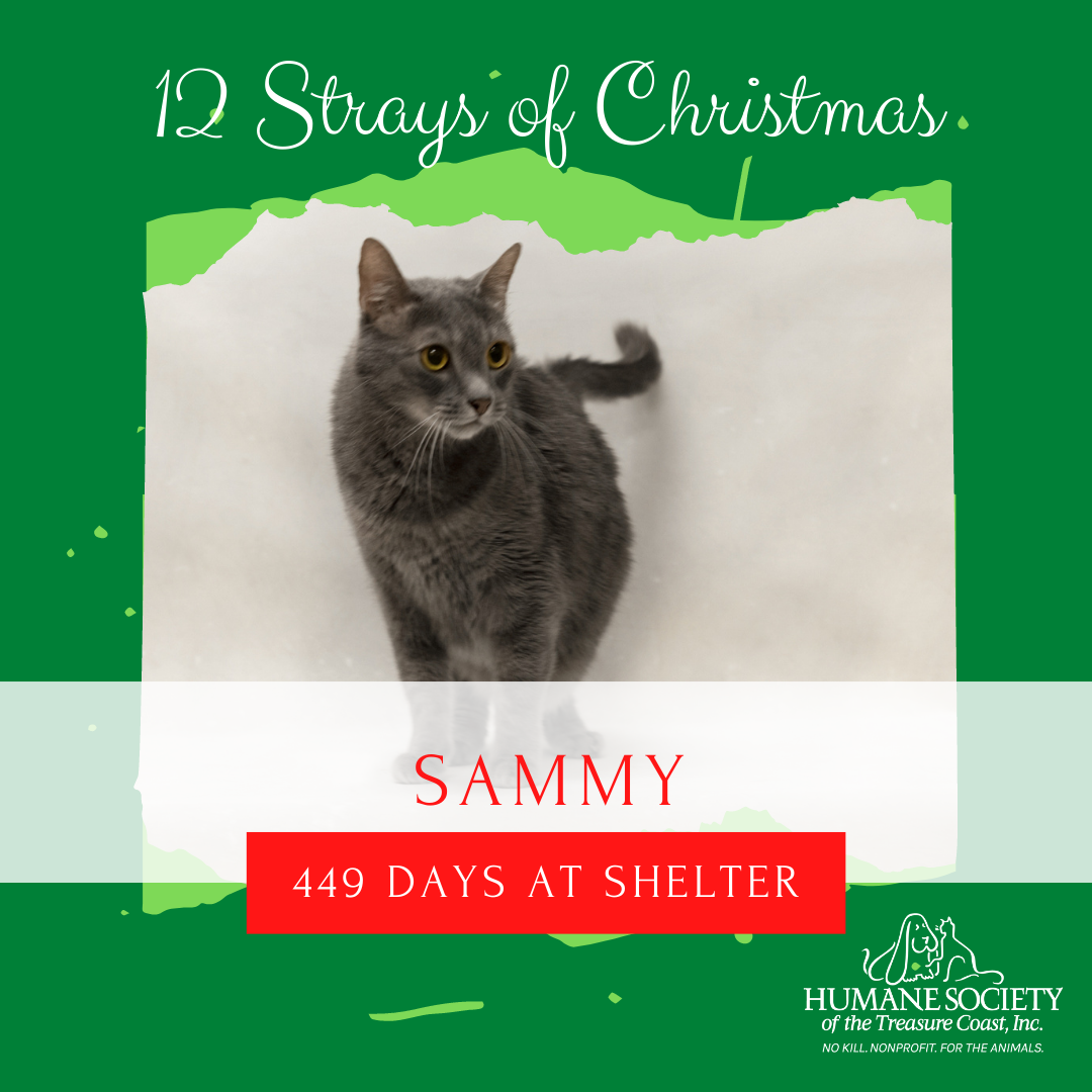 12_Strays_of_Christmas_12_Sammy.png