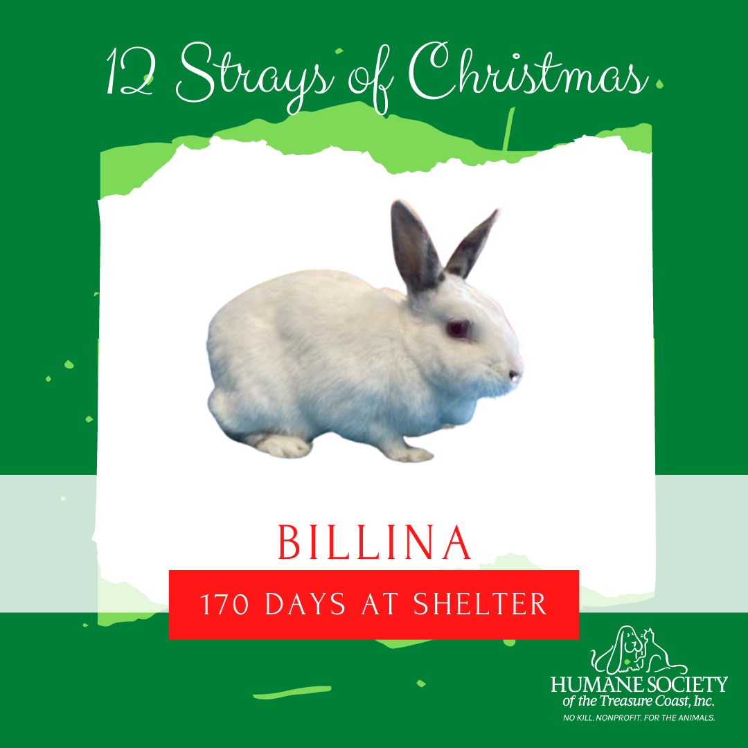 12_Strays_of_Christmas_3_Billina.png