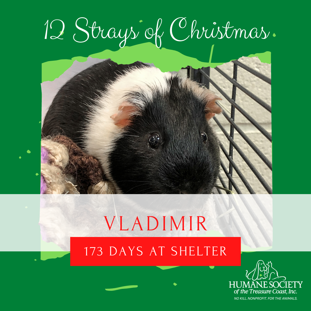 12_Strays_of_Christmas_4_Vladimir.png