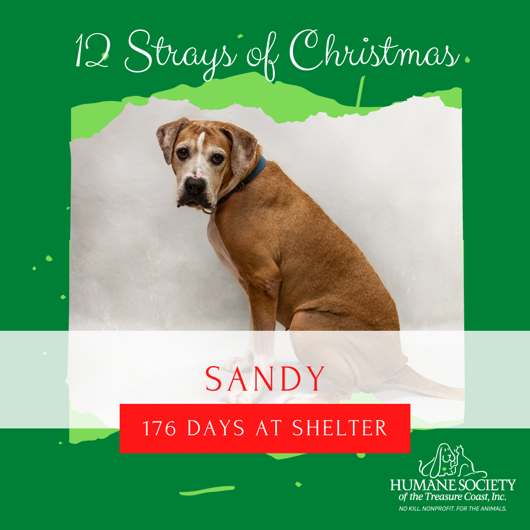 12_Strays_of_Christmas_5_Sandy.png
