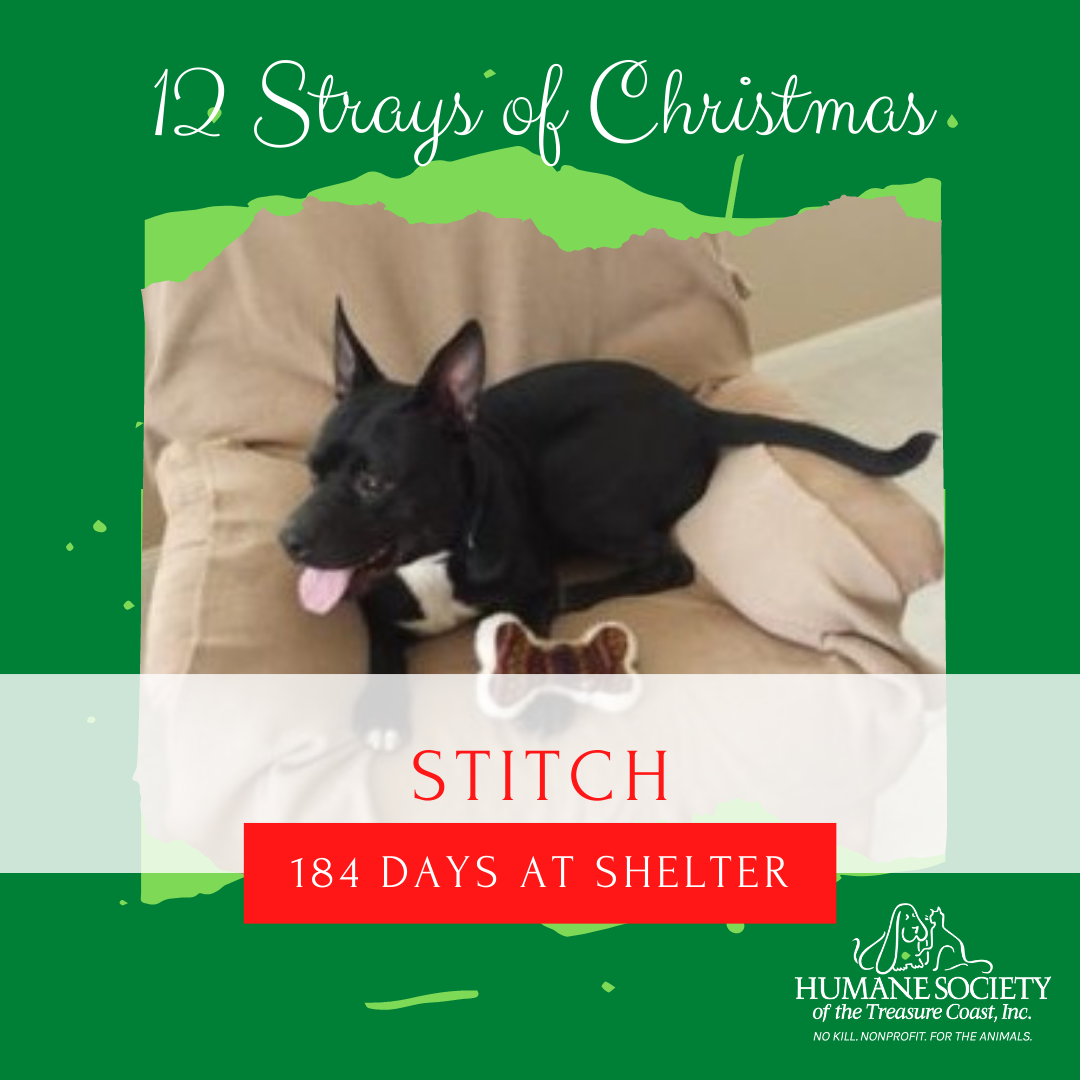 12_Strays_of_Christmas_7_Stitch.png