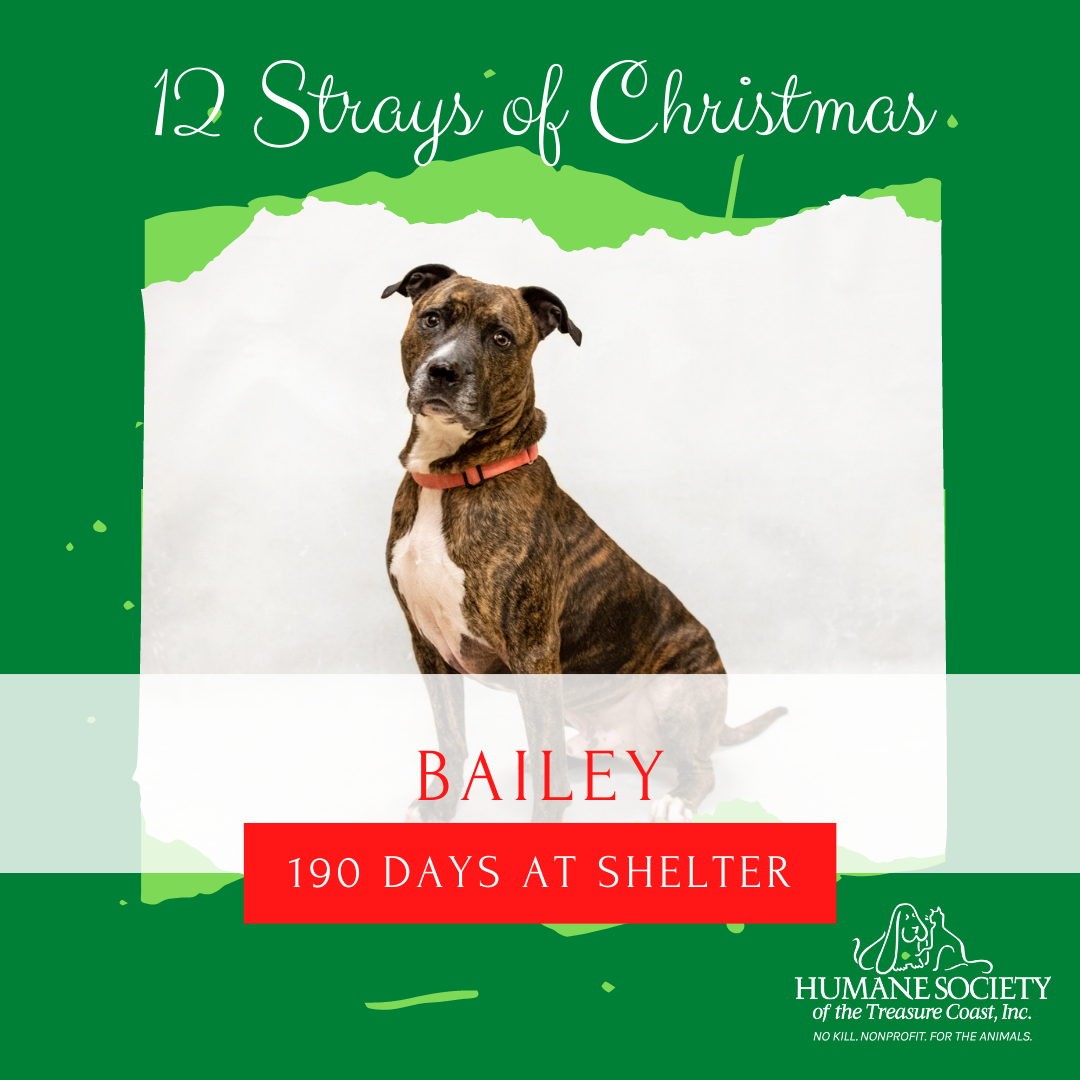 12_Strays_of_Christmas_8_Bailey.png